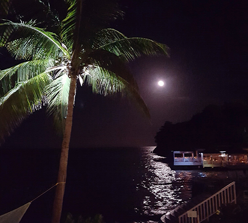 moon-and-palm-tree